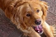 10 manje poznatih činjenica o psima